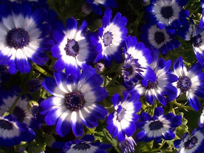 wallpaper hd flowers. nature wallpaper hd 1080p.