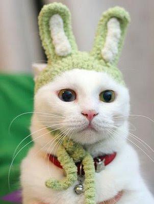 coup de coeur Funny-cat