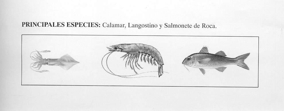 [Principales+especies.JPG]