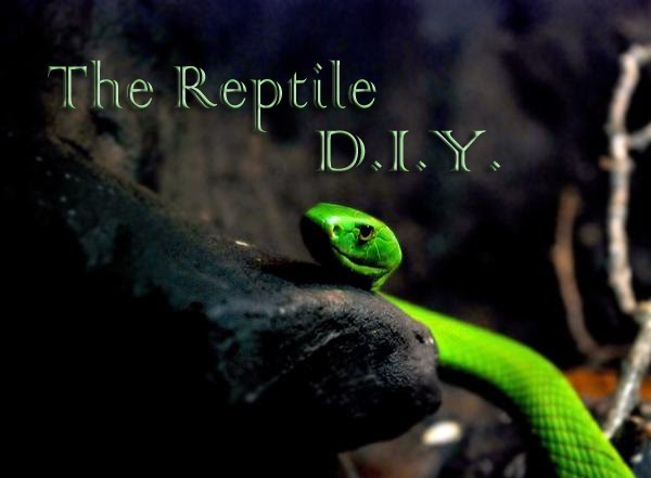 The Reptile DIY: Misting System and Cage Ideas