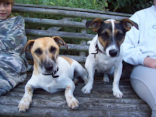 Happiness is a Jack Russell or two