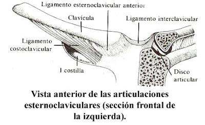 Anatomia Descriptiva Clav Cula