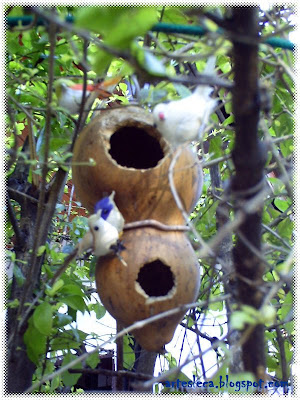 Casinha de passarinho de porongo(cabaça)