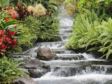 Ser como um rio que flui...