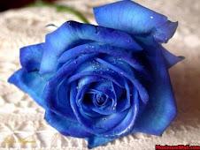 Rosas azuis para a minha cerejita