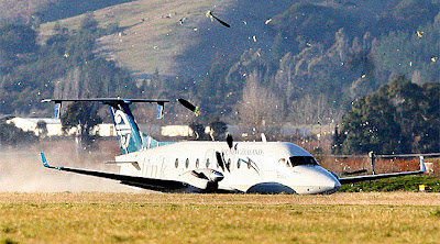 Beech 1900D belly landing at Woodbourne AD. Picture from www.dompost.co.nz