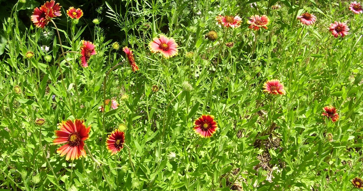 Plant native a beautiful garden in georgia with native for Landscaping with native plants