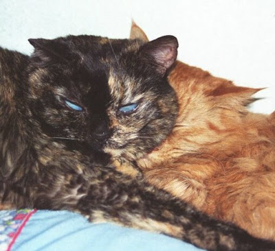 Bunny and Punkin in February 2008