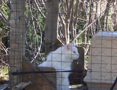 BeBe in the Backyard