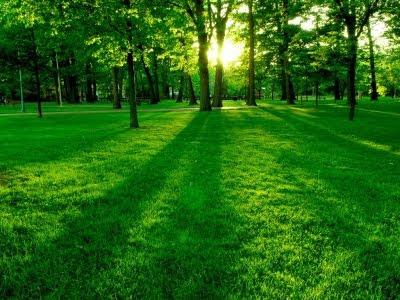 imagen bosque verde