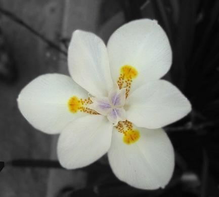 hojas en blanco