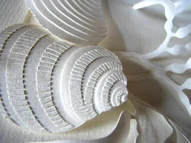 white paper sculpture shells