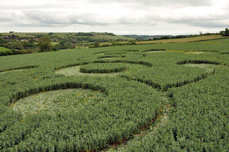 crop circle 7 juni 2010