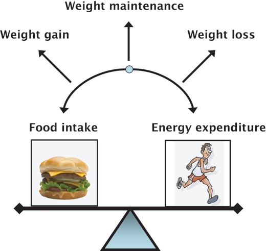 Food Lovers: Energy Balance