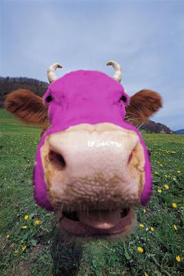 vaca roxa - clique para ampliar