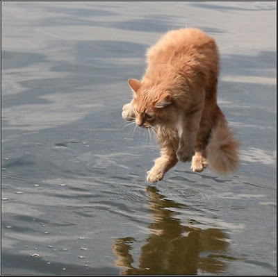 Cat on water
