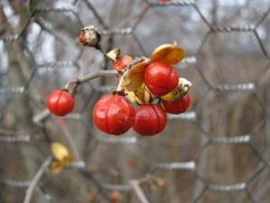 [berries+1]