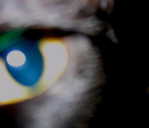 [aloe's+eye.jpg]