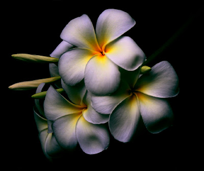 [flowers4wemen.jpg]