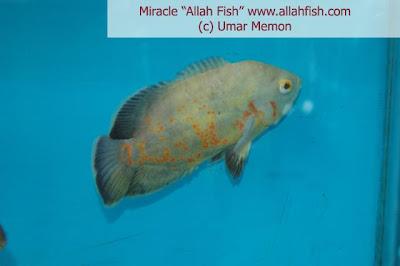 name of Allah 11