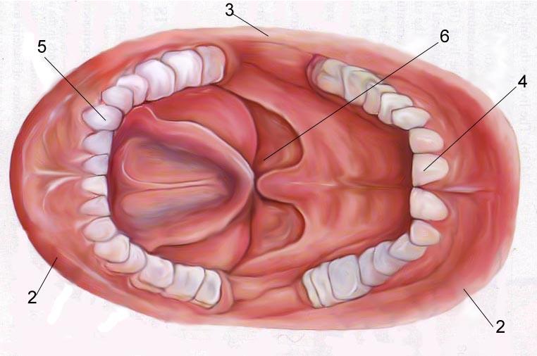 oral seks hpv
