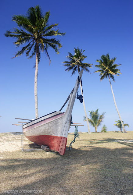boat and coconut trees picture