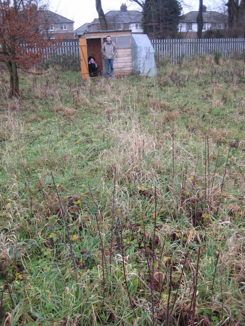Our Plot at the beginning - January 2008