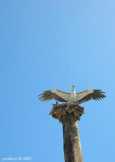 sea eagle 2007
