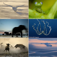shell wildlife photographers