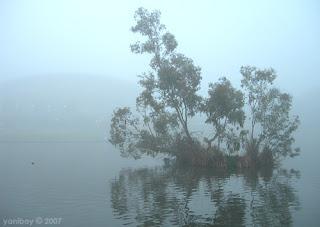 misty island 2007
