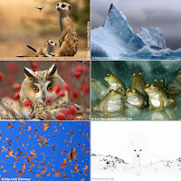shell wildlife photograph of the year entries