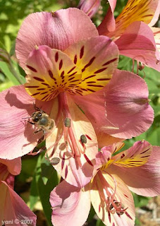 exotic flower with bee