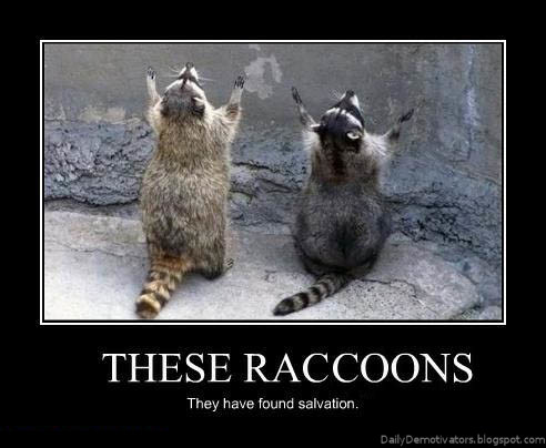 these raccoons demotivational poster
