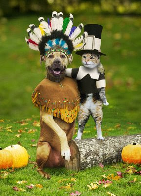 dog as Indian and cat as pilgrim picture