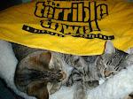 Steeler Cats