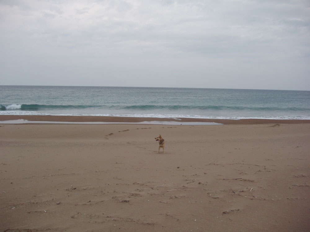 [dog.jpg]