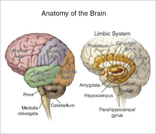 Mr  Cantor's AP Psychology Blog: Reading Assignment Unit 3