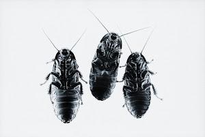 cockroach-o-meter
