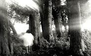 En la profundidad del bosque