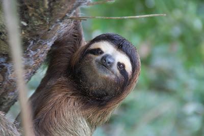 Ashabot Language Barrier No Sloth Lucky Us