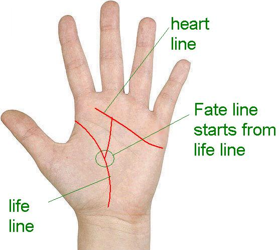 palmistry: Know your Future: Fate line starts from life line