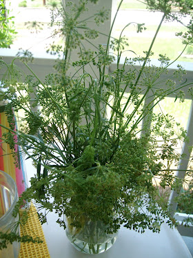 Fresh Parsley [Going to seed]