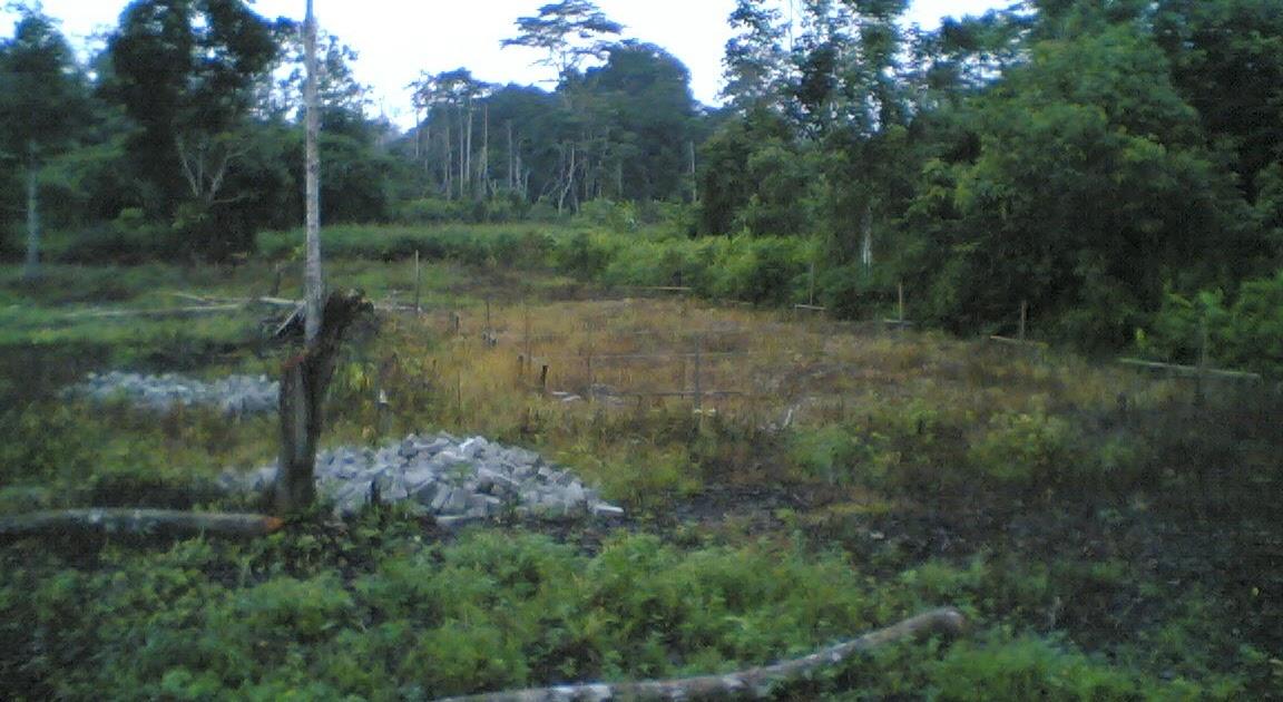 Maklumat Pertanian Ternakan Tanaman Perikanan Dan Agrotourism Kandang Kambing Kebun Warisan 2008 The Beginning
