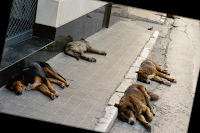 perros griegos