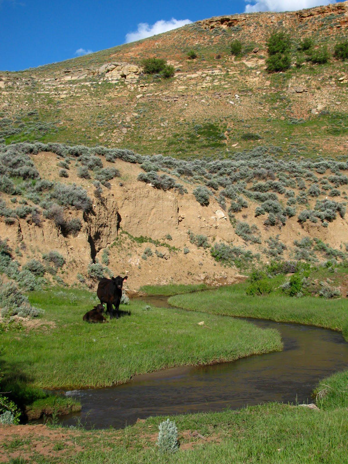 Thermopolis Wyoming Kirby Creek Road