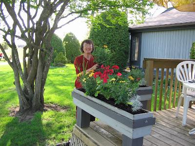 Cvijeće oko kuće  - Page 4 Tulip+Festival+018