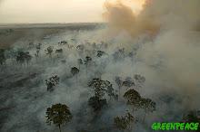 Mundo sem árvores, mundo sem VIDA