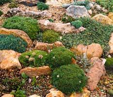 Una hera 02 12 07 09 12 07 for Plantas para rocallas