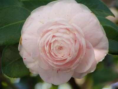 les 3 roses niort