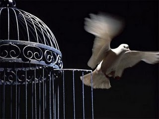 flying+bird+out+of+its+cage+the+best+for+the+post.jpg
